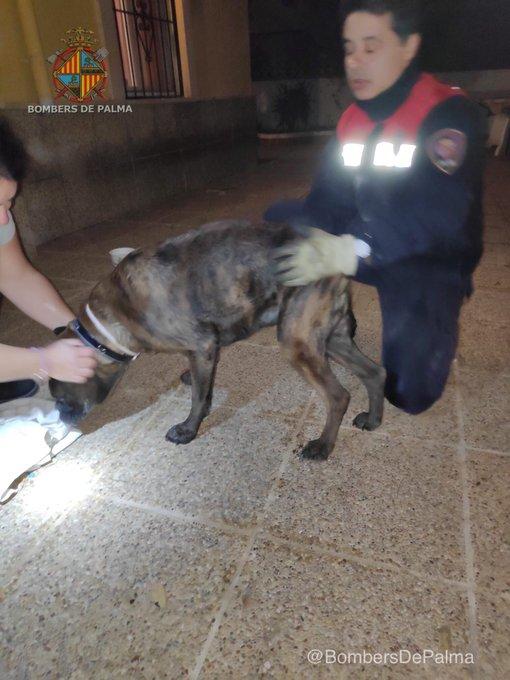 Rescate de un perro en pánico por los petardos